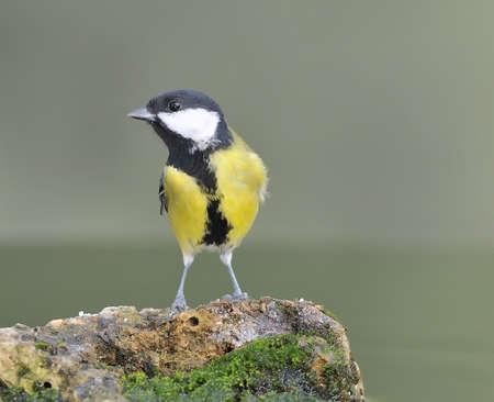 calved: Bird on a rock. Stock Photo
