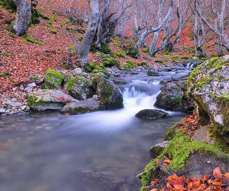 woodland scenery: Autumn landscape.