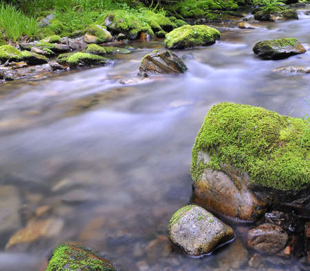 riverbed: Moss in the river.