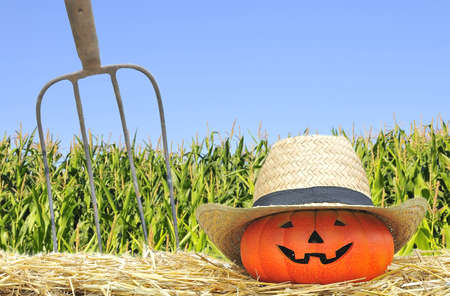 Halloween pumpkin in the farm with field corn Stock Photo - 15216653