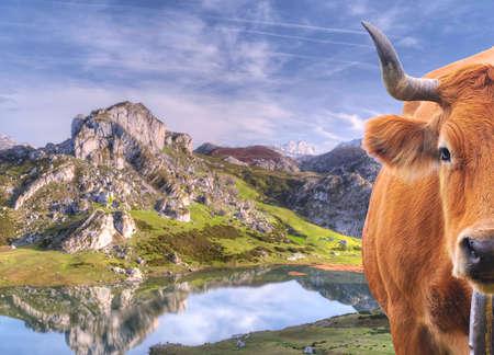 Cow grazing Stock Photo - 15216693