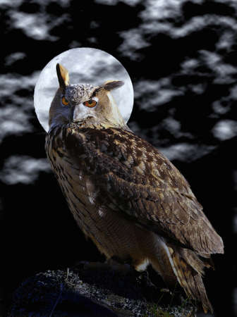 Euroasian eagle owl and full moon