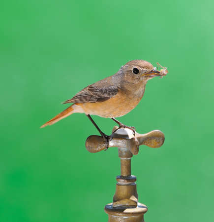 Bird and faucet isolated on green background  photo
