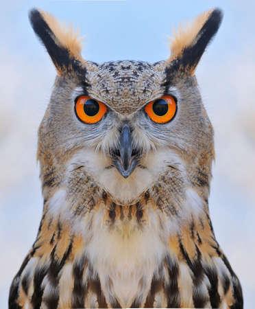 Euroasian eagle owl on a tree forest