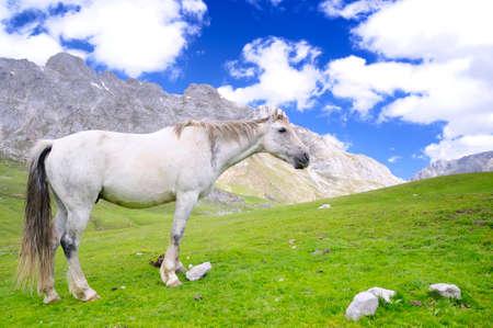 picos: Wild horse in Picos de europa, Spain  Stock Photo