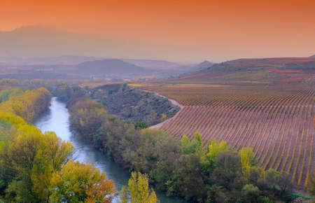 bodegas: Vi�edos en la provincia de La Rioja en Espa�a. Foto de archivo