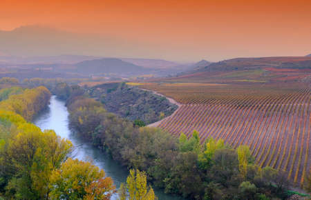 Vineyards in the province of La Rioja in spain. photo