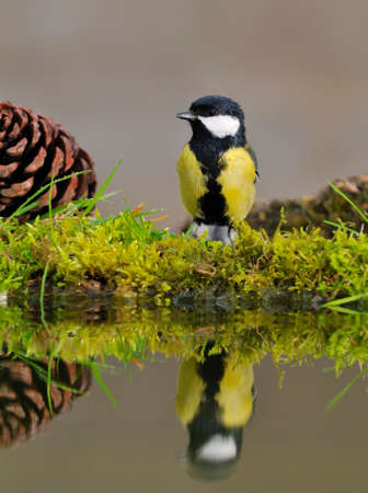 Bird perched on the pond to drink water. photo