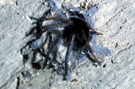 Spider in the hole photo