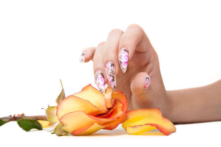 The hand of the girl with beautiful nails, touches to a rose, on a white background