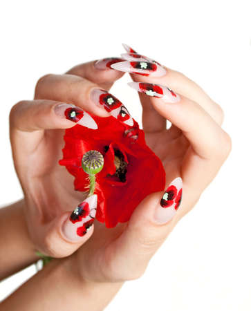 Two female hands with beautiful nails over a red flower, on a white background