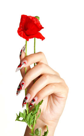 varnish: Female hand with beautiful nails holds a red flower, on a white background Stock Photo