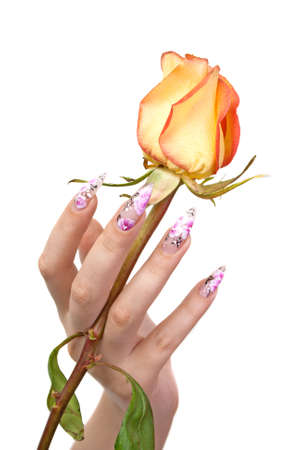 The hand of the girl with beautiful nails, holds a rose between fingers, on a white background Stock Photo