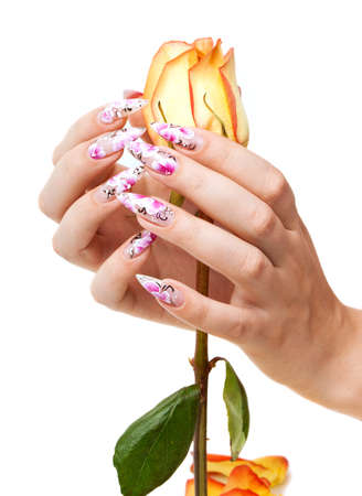 Two hands of the girl with beautiful nails hold a rose, on a white background Stock Photo