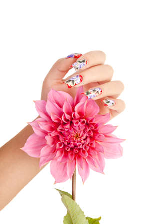 Female hand with beautiful fingernails over a pink flower, on a white background photo