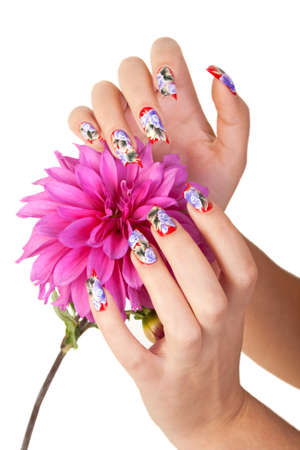 Two hands of the girl with beautiful nails hold a flower, on a white background Stock Photo