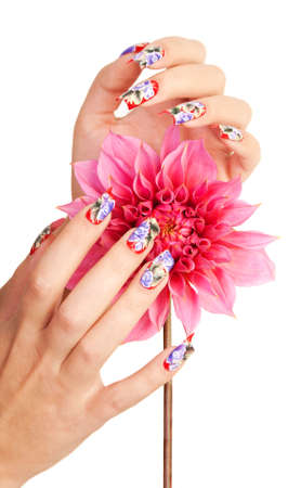 Two female hands with beautiful fingernails over a pink flower, on a white background photo