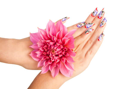 Two female hands with beautiful fingernails over a pink flower, on a white background