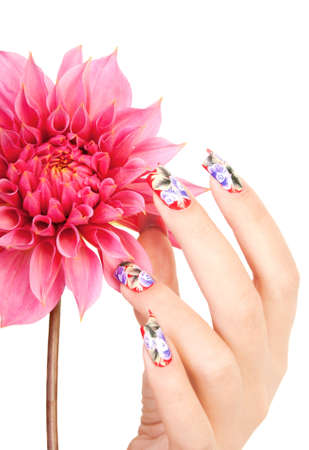 Female hand with beautiful fingernails over a pink flower, on a white background Stock Photo