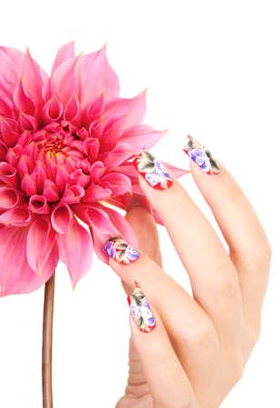 Mano de la mujer con las uñas hermosas sobre una flor de color rosa, sobre un fondo blanco