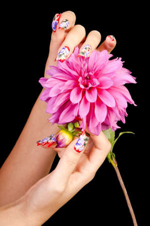 Two female hands with beautiful fingernails over a pink flower, on a black background