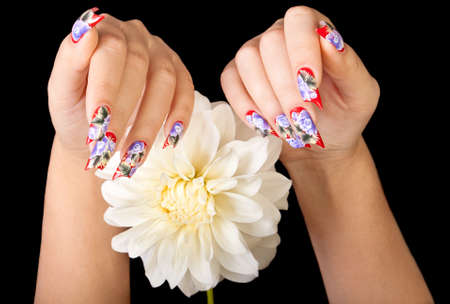 Two female hands with beautiful fingernails and a white flower, on a black background Stock Photo - 11234987