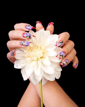 Two female hands with beautiful fingernails and a white flower, on a black background