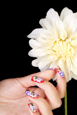 Female hand with beautiful fingernails holds petal of white flower, on a black background Stock Photo
