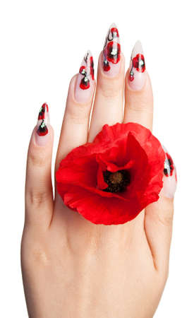 Female hand with beautiful nails holds a red flower, on a white background photo