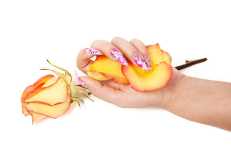 Female hand with beautiful nails, holds petals in hand, over a rose, on a white background