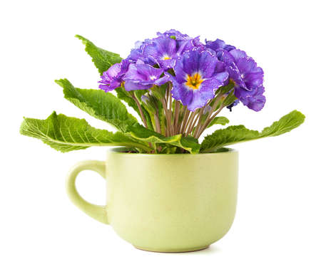 Beautiful violet flower in big green cup photo