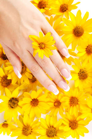 French manicure on the hands of woman over background from yellow flowers Stock Photo