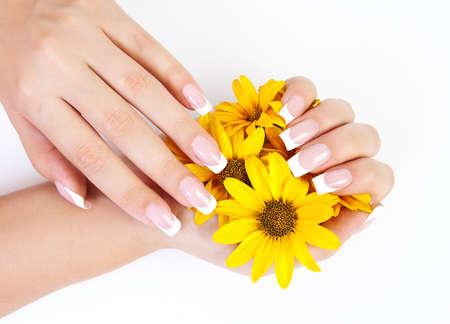 Französisch Maniküre auf den Händen einer Frau, mit gelben Blumen in der Hand, auf einem weißen Hintergrund Standard-Bild