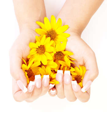 French manicure on the hands of a woman, with yellow flowers in hands, on a white background