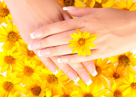 French manicure on the hands of woman over background from yellow flowers, with flower between fingers.