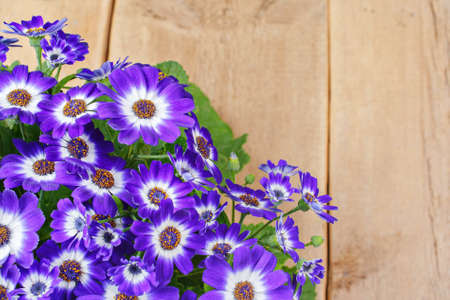 Purple(violet) and white flowers on wooden background.