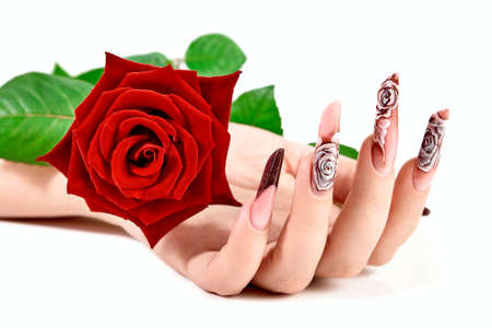 Female hand with beautiful long nails with a red rose lying in the palm. Hands spa and manicure. Isolated on white background. Beauty and stylish manicure concept.