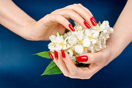 Two hands with beautiful red nails holding a bouquet flowers jasmine over blue backdrop. Hands spa and manicure. Beauty and stylish manicure concept.