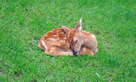 Fawn Imagens