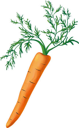 potherb: One orange carrot with lush green sprouts on a white background