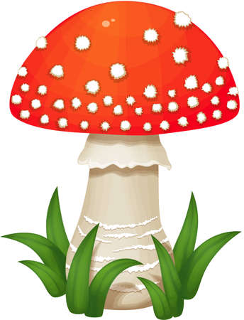 spore: Mushroom grows in the green grass. Fly agaric with white stem and a red spotted cap, with a skirt. Isolated on white background
