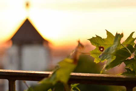 freiburg: A leaf in front of the Schwabentor in Freiburg, Germany during sunset from a hill Stock Photo