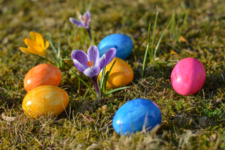 Several colorful Easter eggs lying on grass with crocuses close up Stock Photo