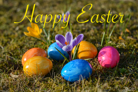 Happy Easter with several colorful Easter eggs lying on grass with crocuses close up Stock Photo