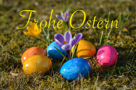 Happy Easter in German with several colorful Easter eggs lying on grass with crocuses close up