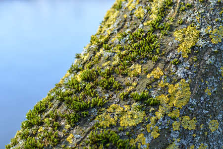 Moss on a tree with warm sunlight close up