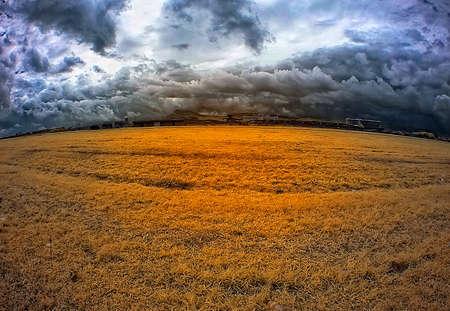 yellowing: Yellowing Grass