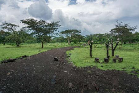 Landscape In Baluran Indonesia