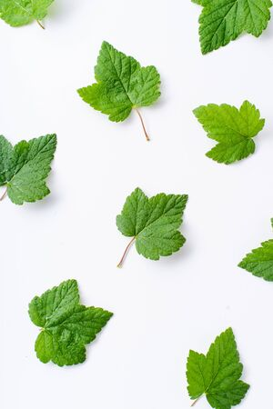 Creative layout with blackcurrant leaves isolated on white backround