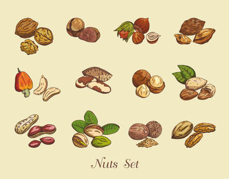 nuts: Set of nuts on a neutral background, vector illustration Illustration